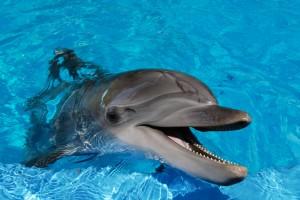 dolphin wallpaper amazing