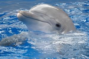 dolphin wallpaper desktop