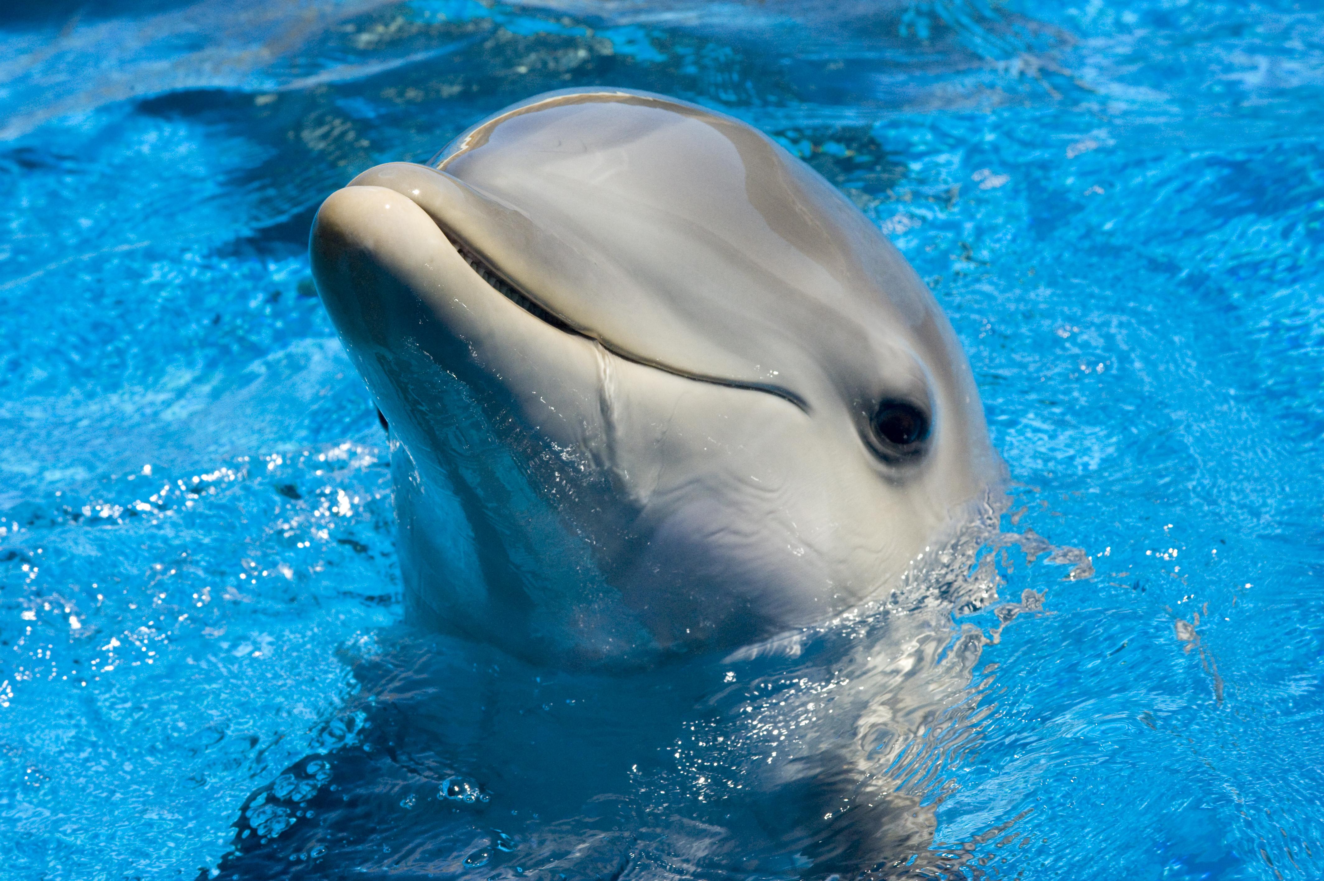 dolphin wallpaper swimming