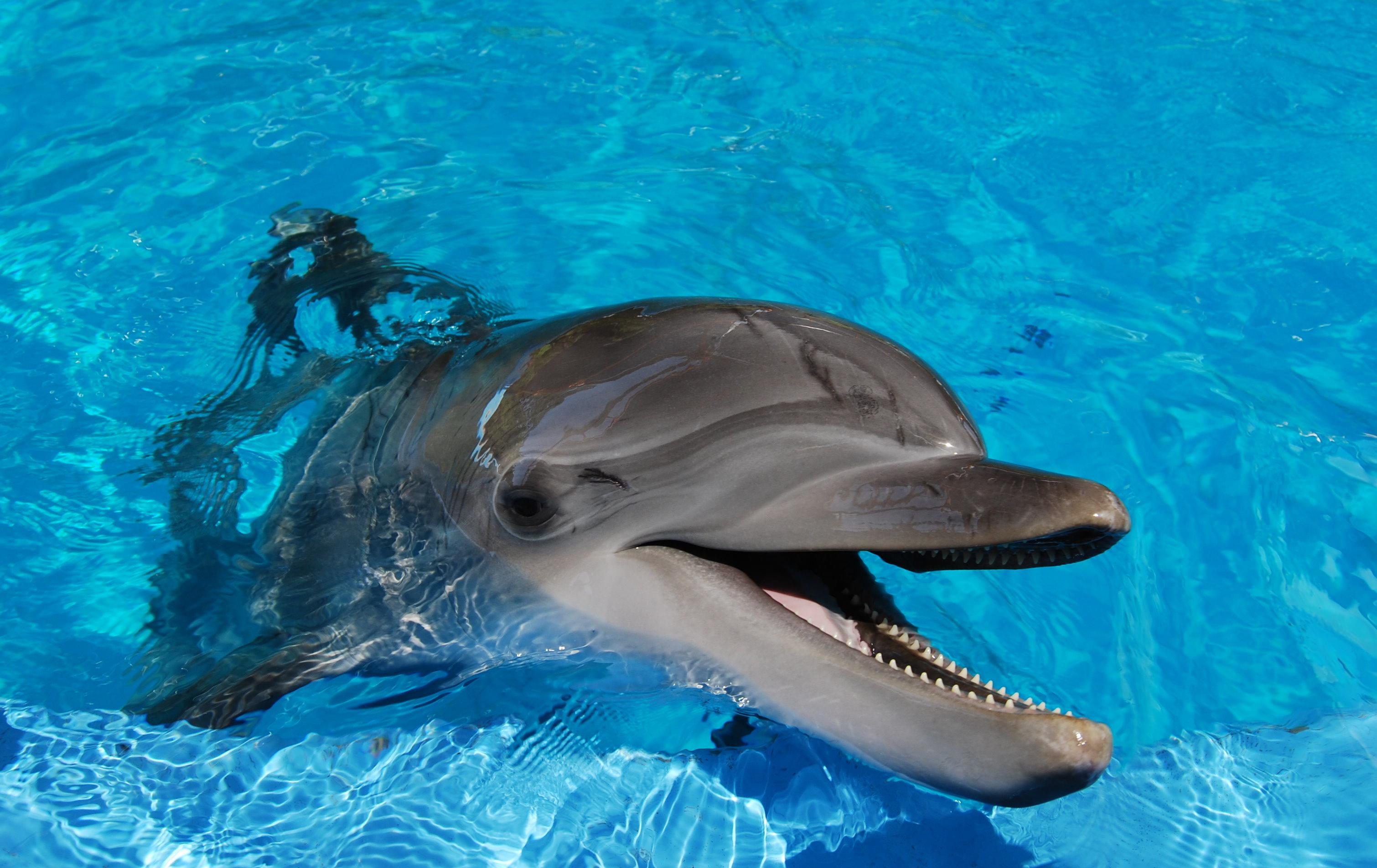 dolphin wallpaper widescreen