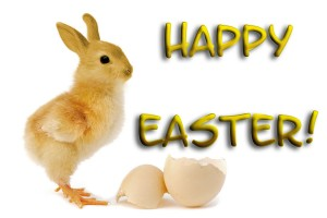 easter wallpapers bunny funny