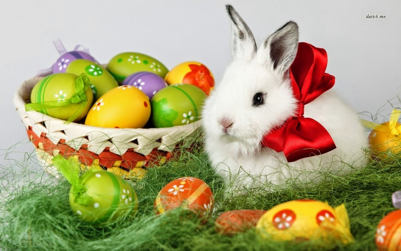 bunny 2016 easter 4k - photo #14