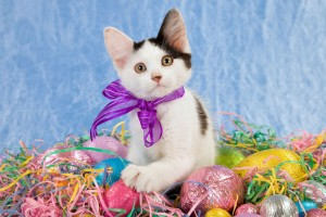 easter wallpapers eggs hd cat