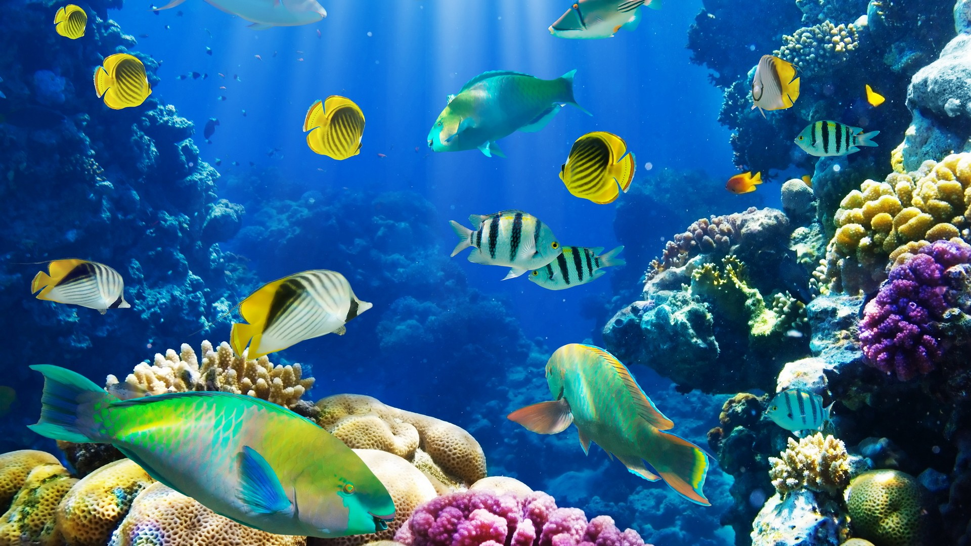 fish wallpaper amazing