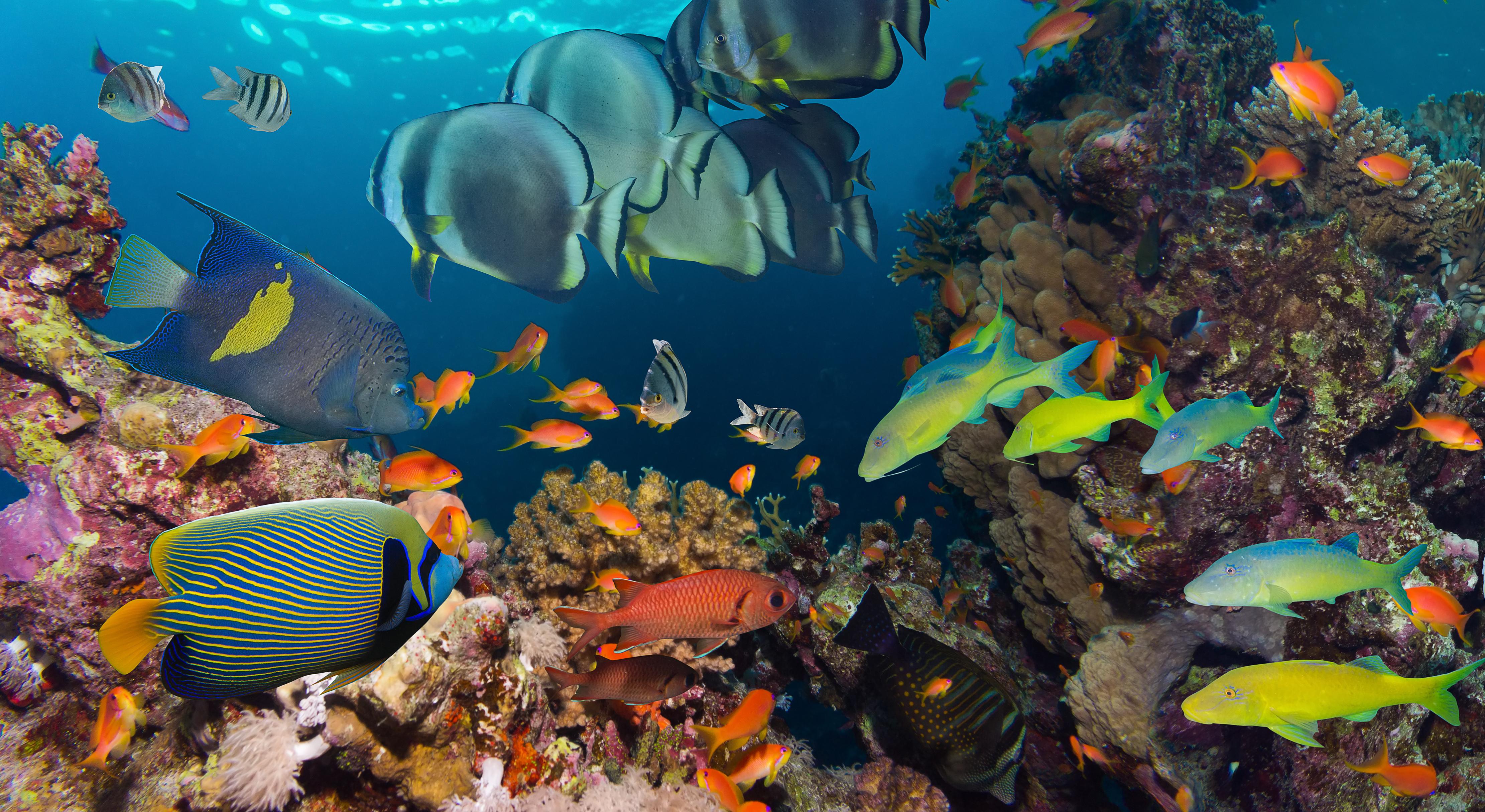 Fish Wallpaper Aquarium