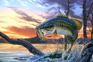 fish wallpaper fantasy