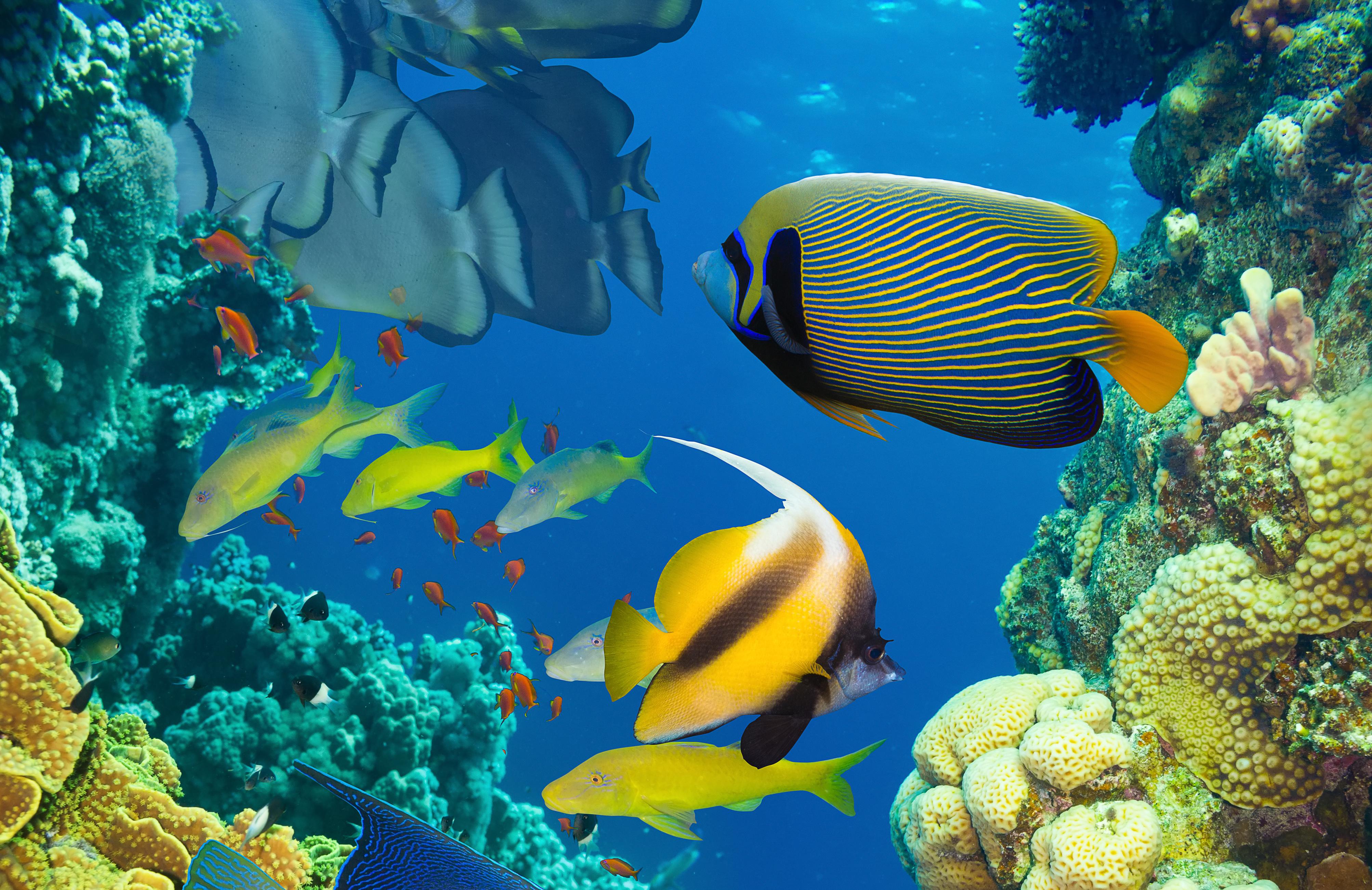 sea fish hd wallpaper