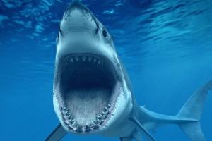 fish wallpaper shark