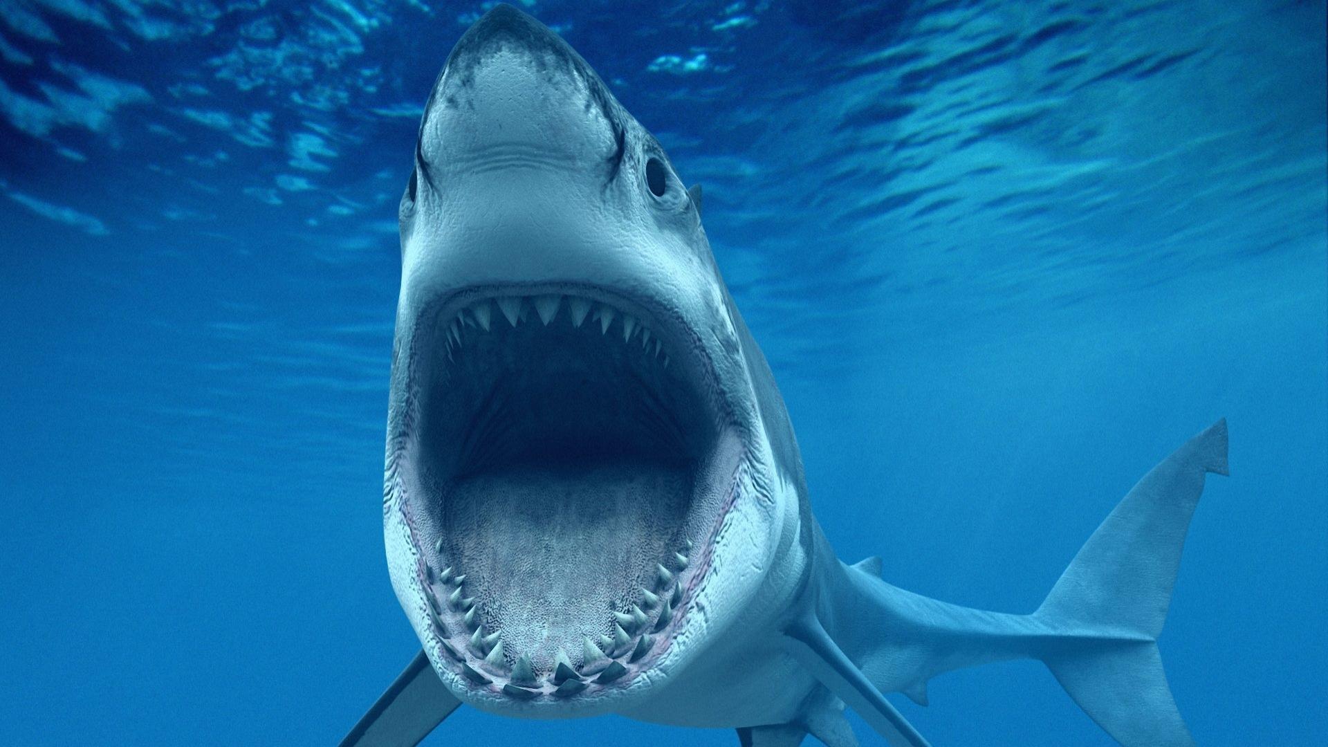 fish wallpaper shark - HD Desktop Wallpapers   4k HD