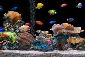 fish wallpaper tank