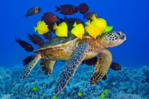 fish wallpaper turtle