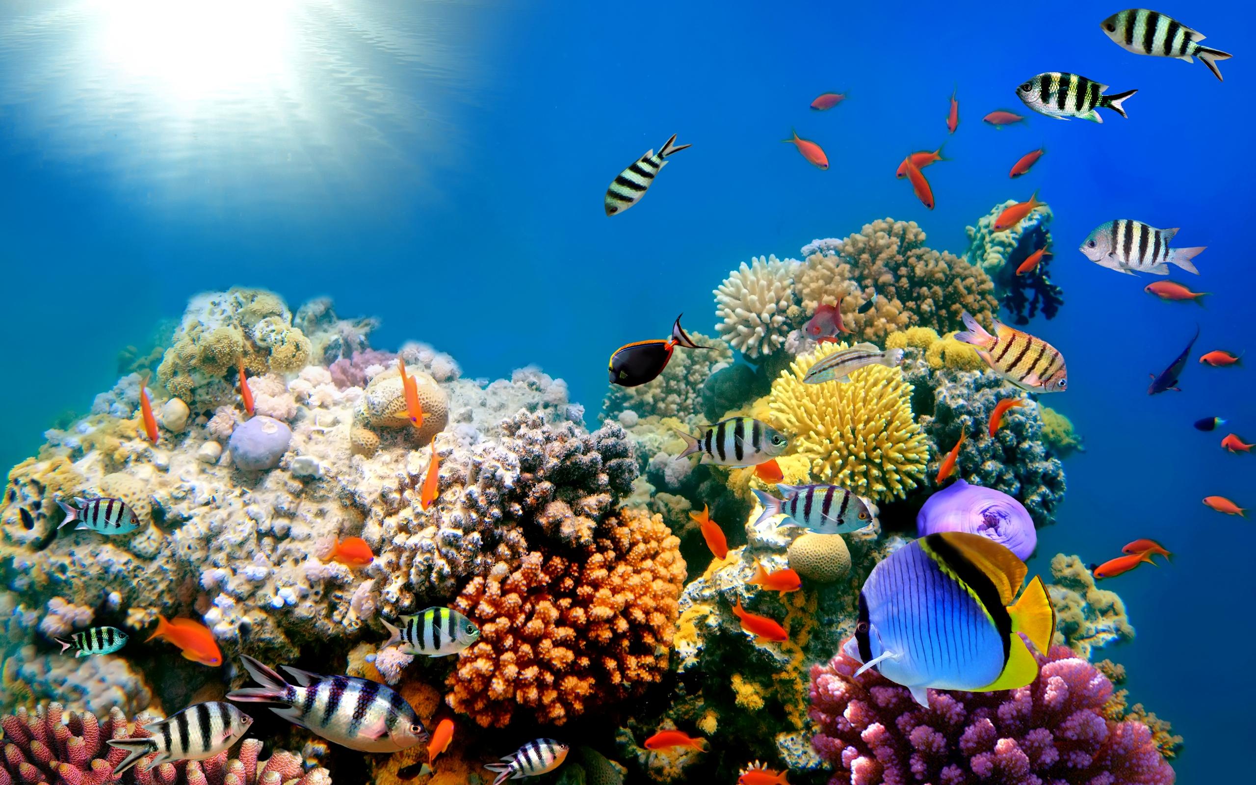 fish wallpapers for desktop