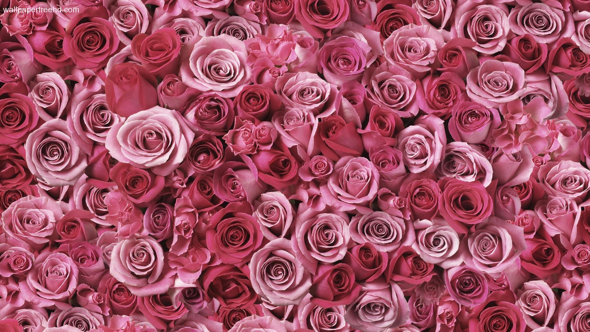 floral wallpaper vintage rose aa
