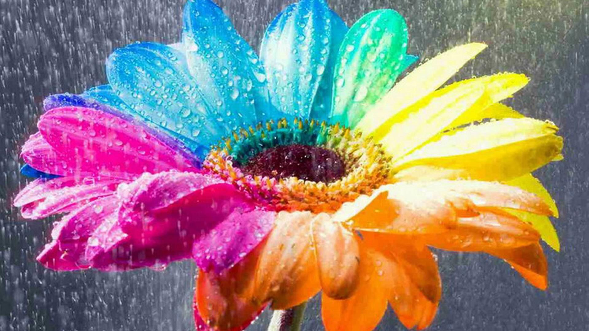 Flower Wallpapers Colorful Rain Hd Desktop Wallpapers