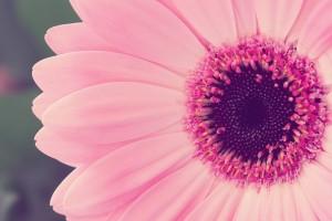 flower wallpapers free desktop