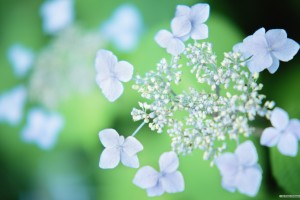 flower wallpapers photography