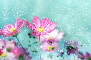 flower wallpapers pink amazing