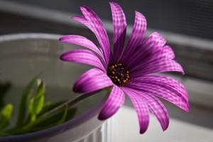 flower wallpapers purple stunning
