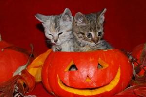 halloween wallpapers cats cute