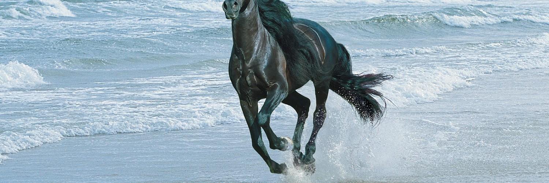 horse wallpapers black water - HD Desktop Wallpapers | 4k HD