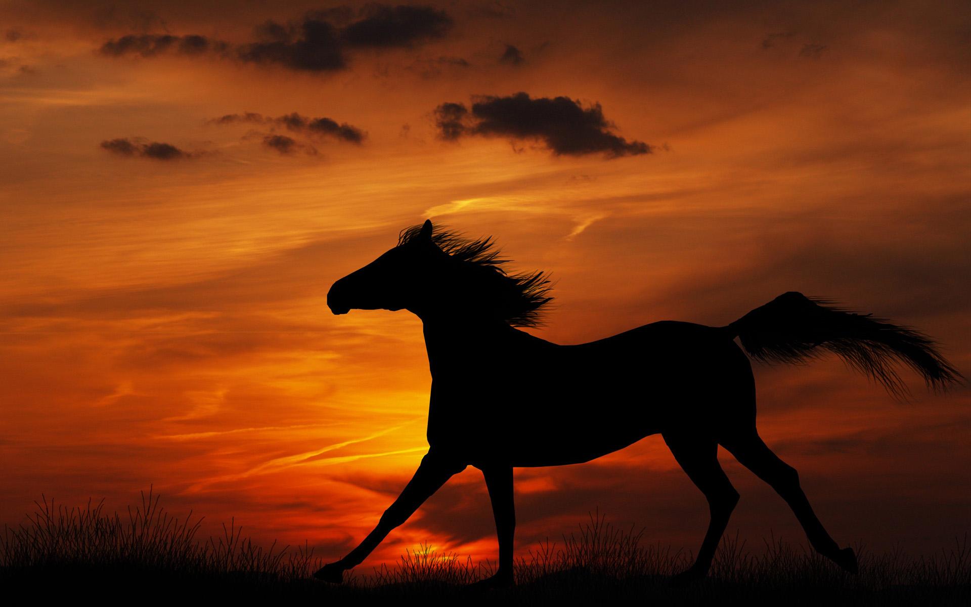 Horse Wallpapers Sunrise - Hd Desktop Wallpapers  4K Hd-9370