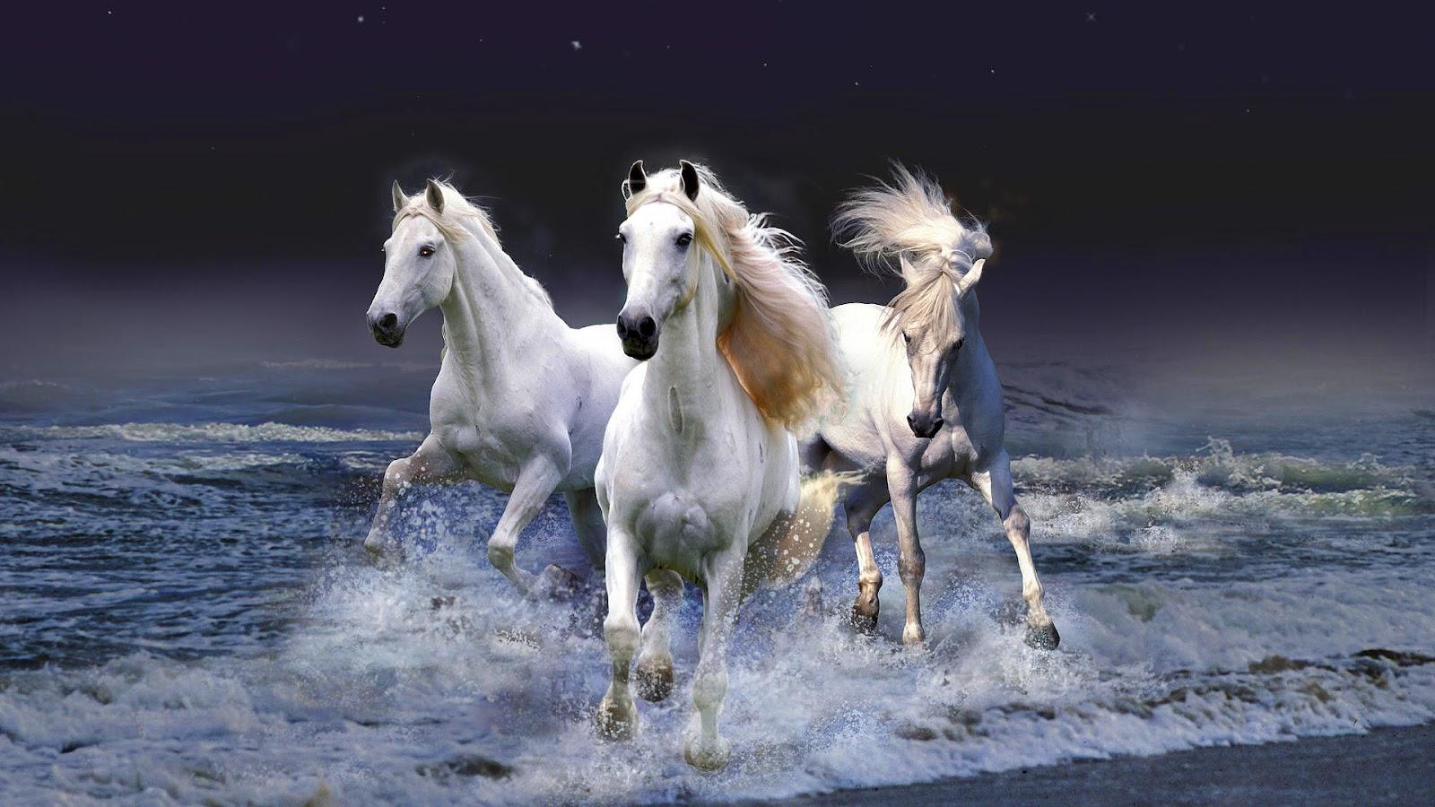 horses running wallpaper