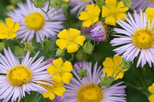 images of flowers