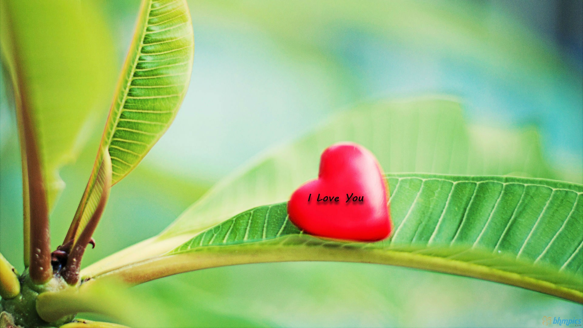 love wallpaper nature cute - HD Desktop Wallpapers 4k HD