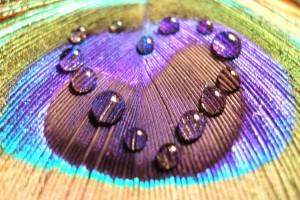 love wallpaper nature dew drops