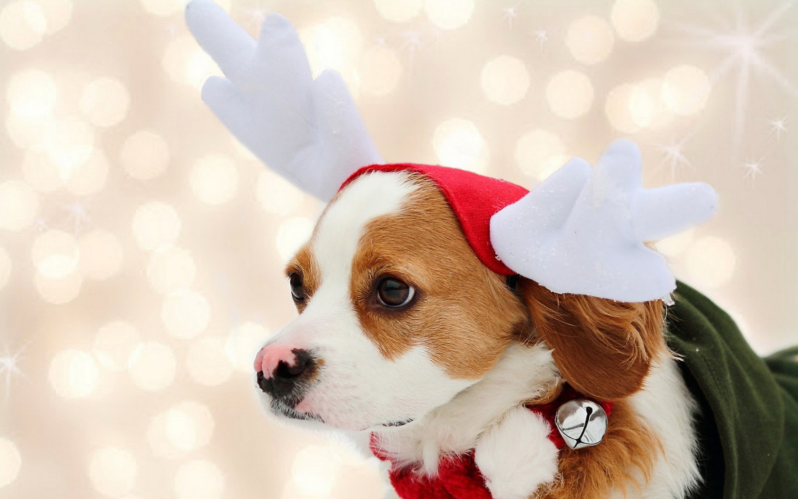 merry christmas wallpapers dogs