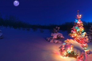 pictures of a christmas tree