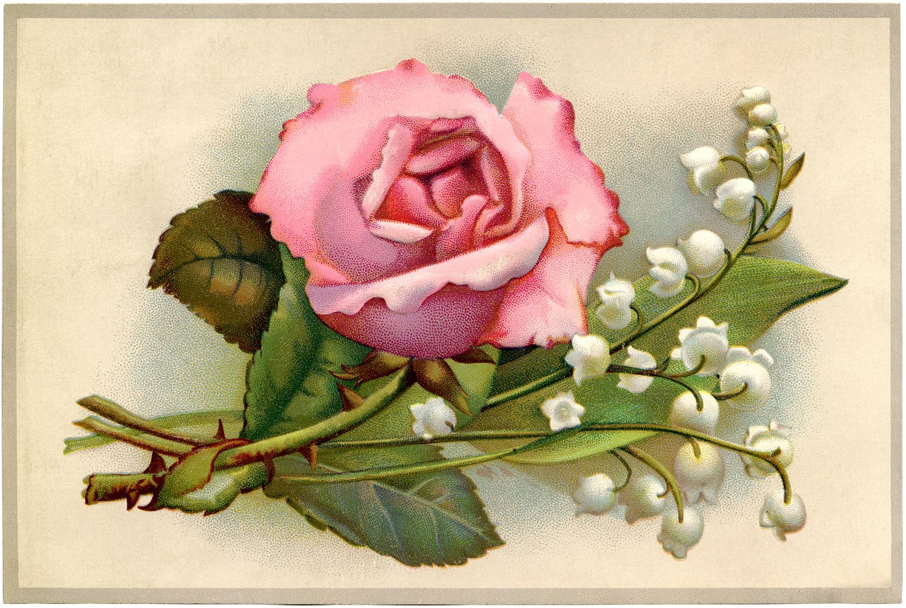 floral wallpaper vintage rose - HD Desktop Wallpapers   4k HD