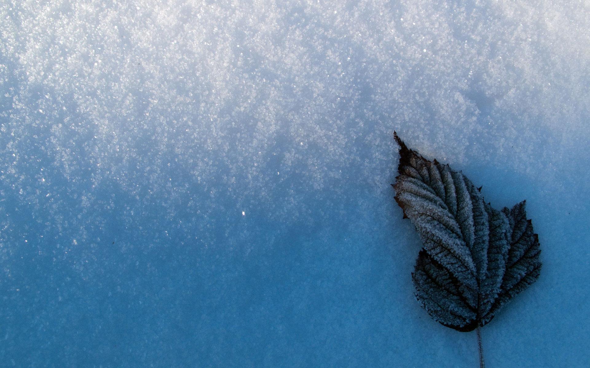 snow wallpaper leaf