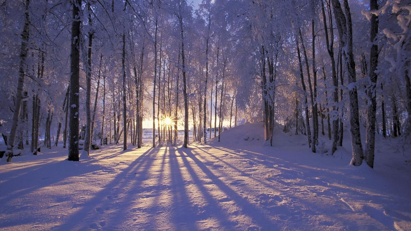 snow wallpaper sunset trees