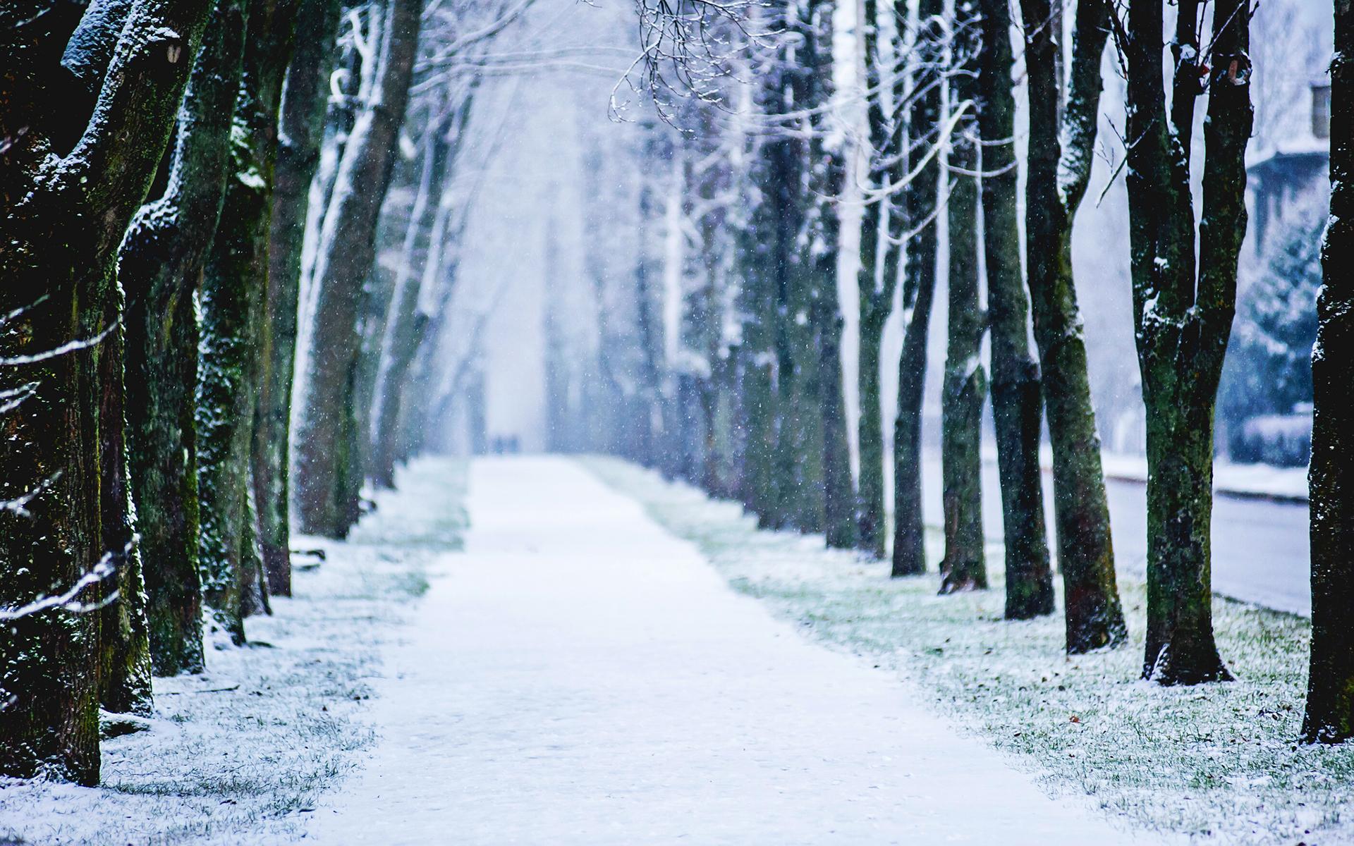 snow wallpaper trees