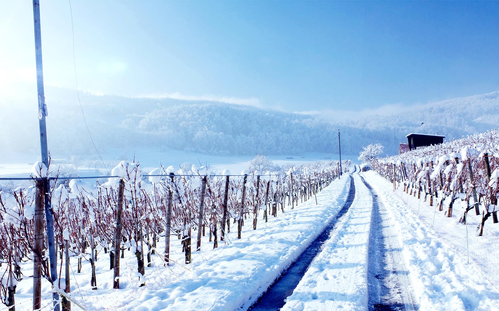 snow wallpaper truck road