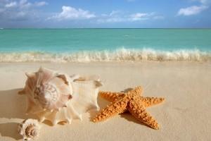 summer wallpapers starfish