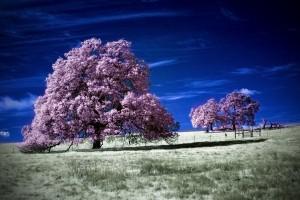 trees wallpaper download
