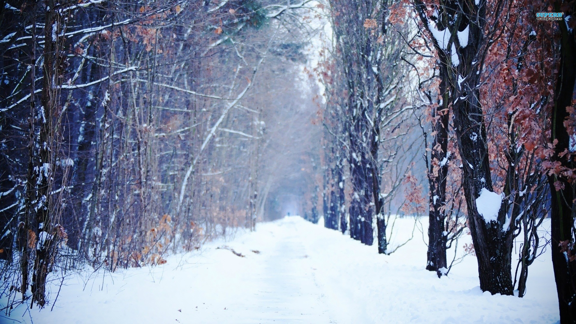 trees wallpapers path winter