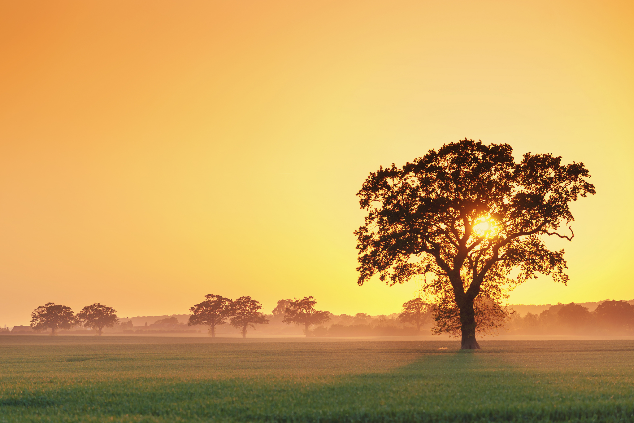 trees wallpapers sunrise
