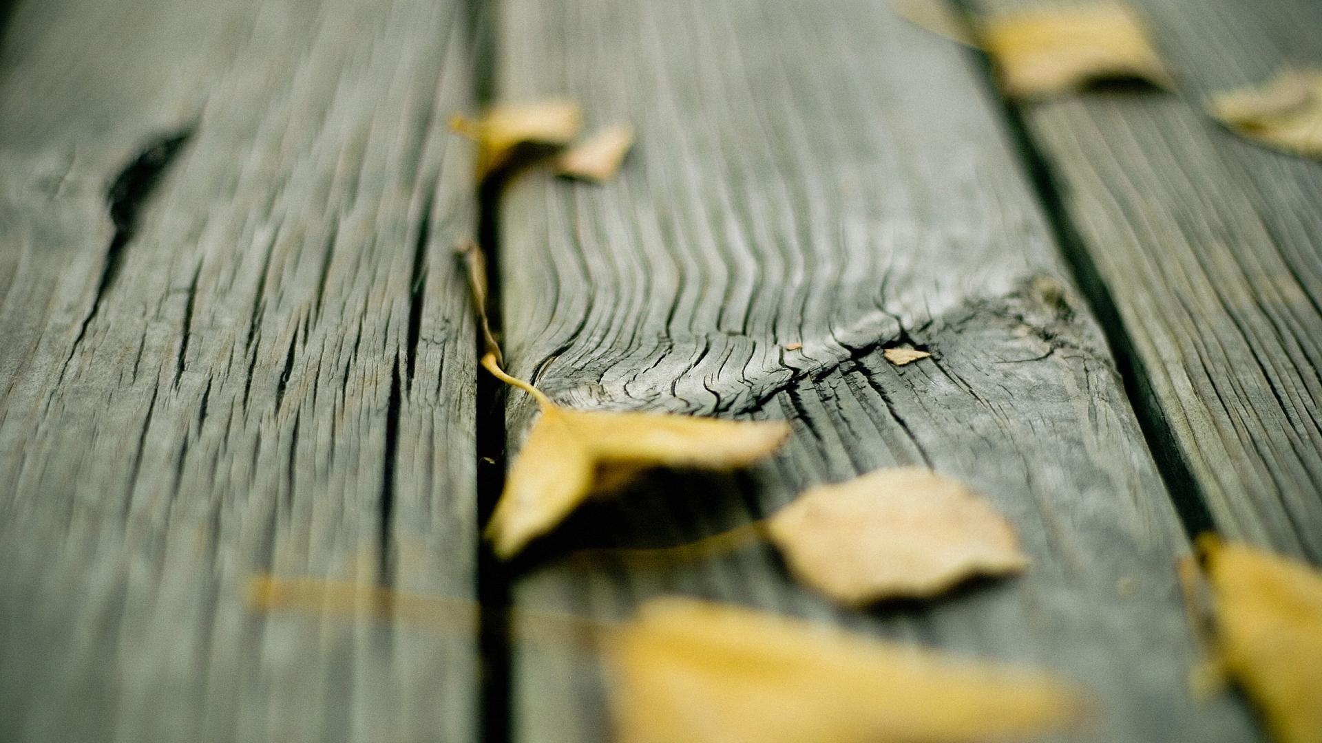 wood wallpaper leaves
