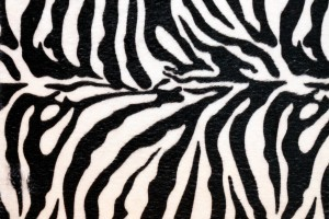 zebra print wallpapers cool