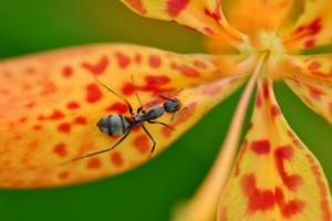 ant nature wallpaper
