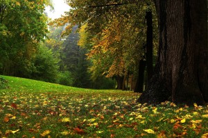 autumn forest images
