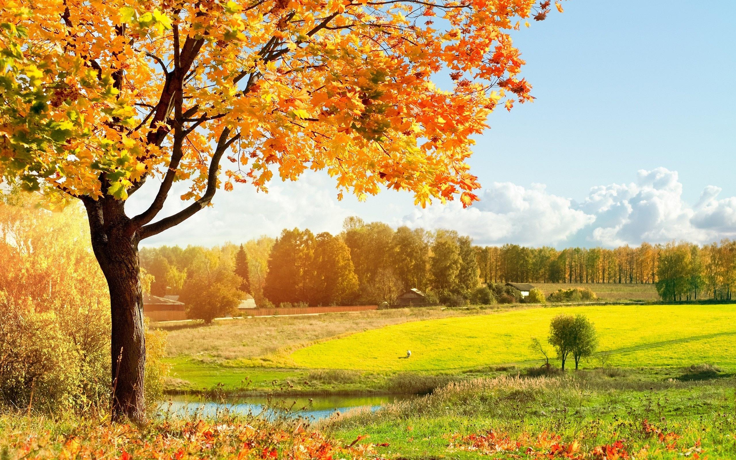 autumn landscape pictures - HD Desktop Wallpapers | 4k HD