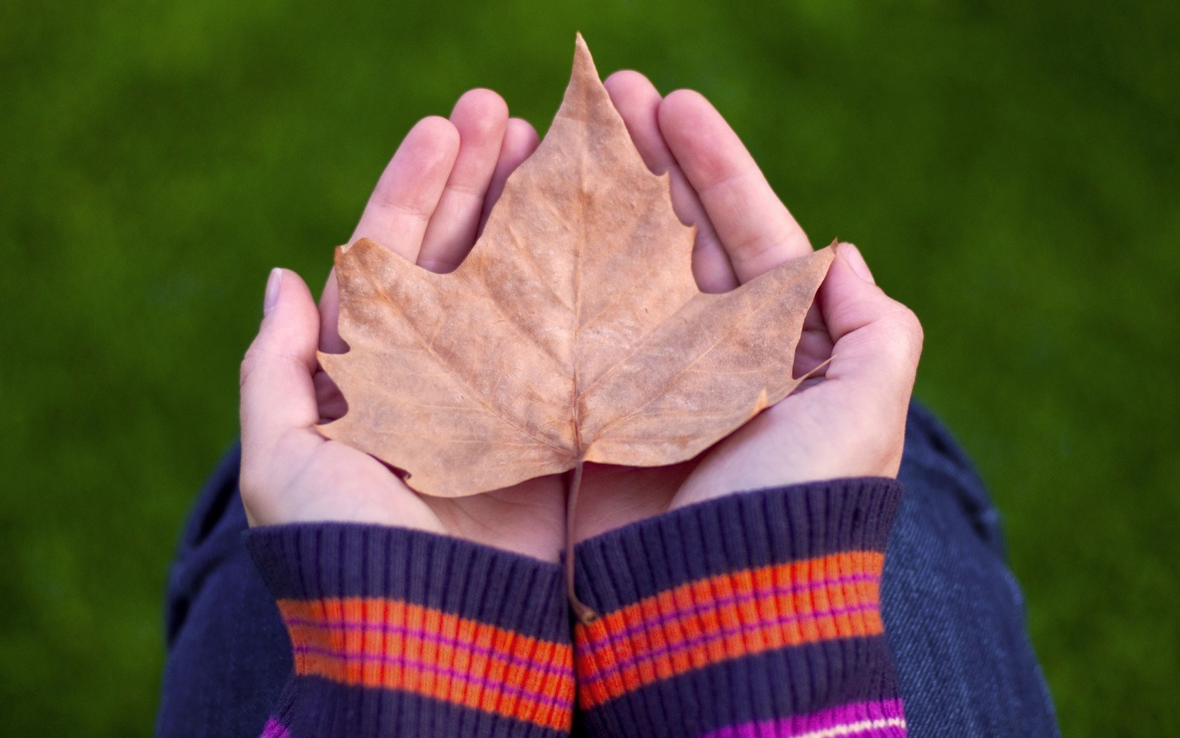 autumn leaf hd pictures