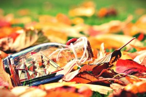autumn leaves images hd