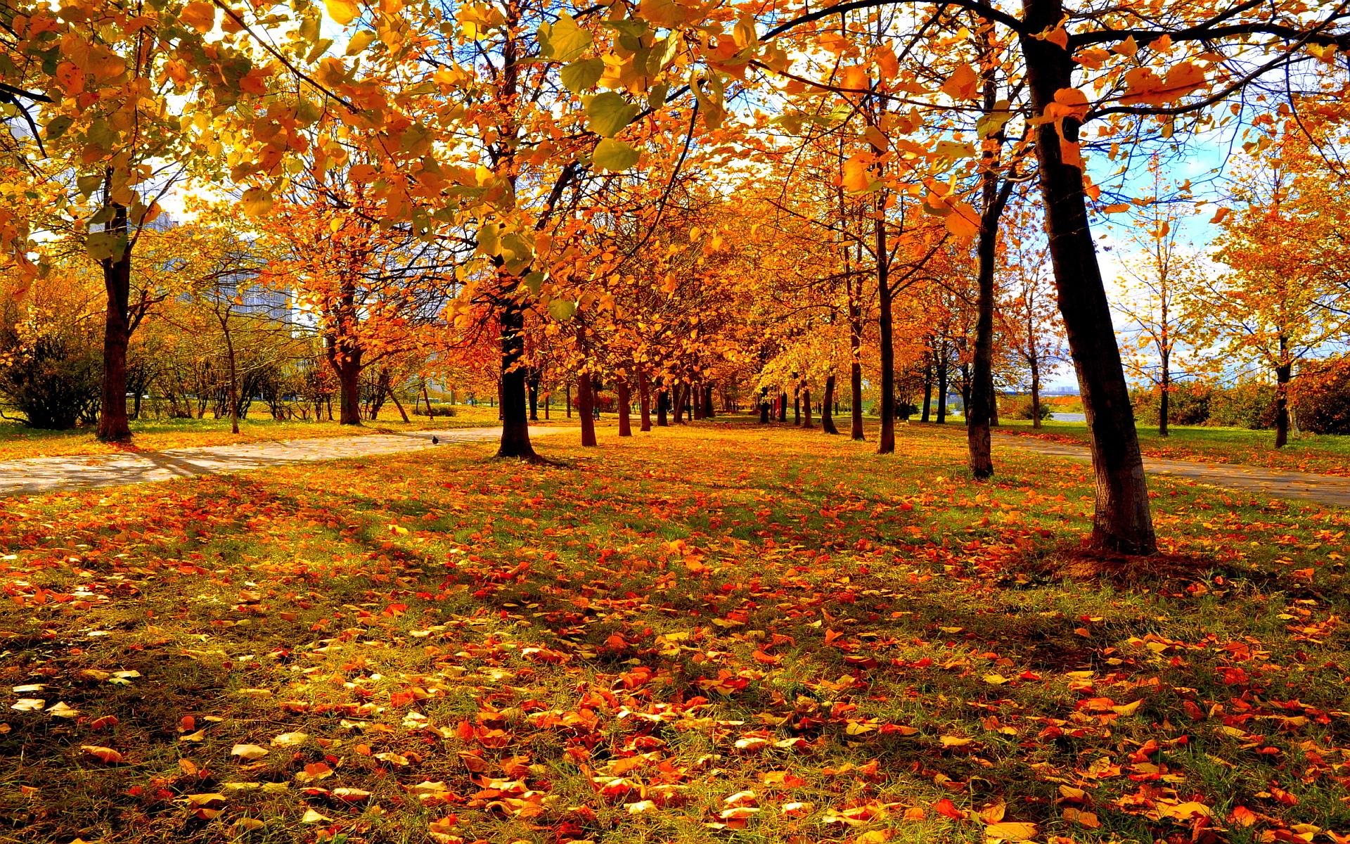 autumn sunset wallpaper - HD Desktop Wallpapers   4k HD
