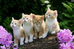 beautiful cute cats