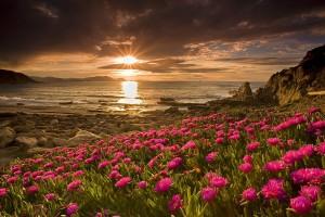 beautiful sunset wallpapers flowers